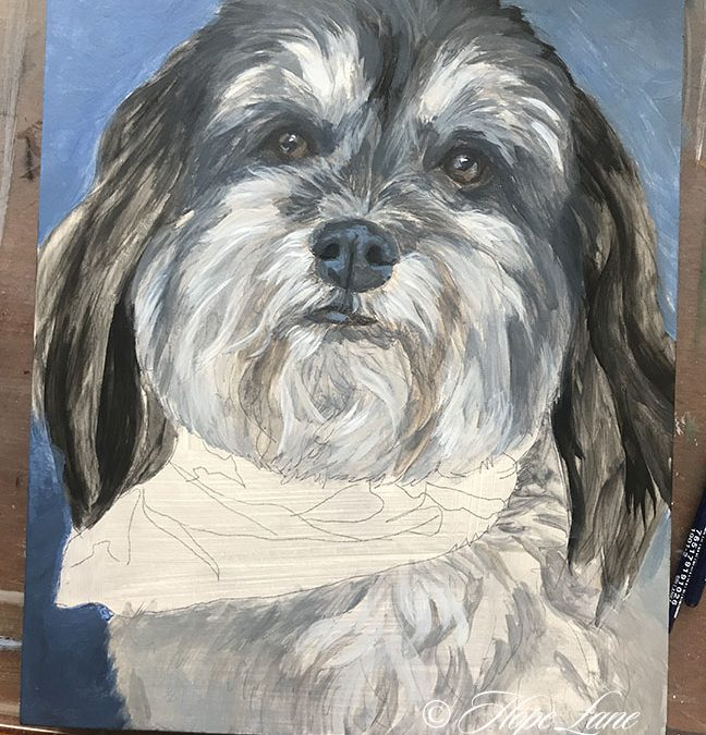 Starting A Havanese in the City