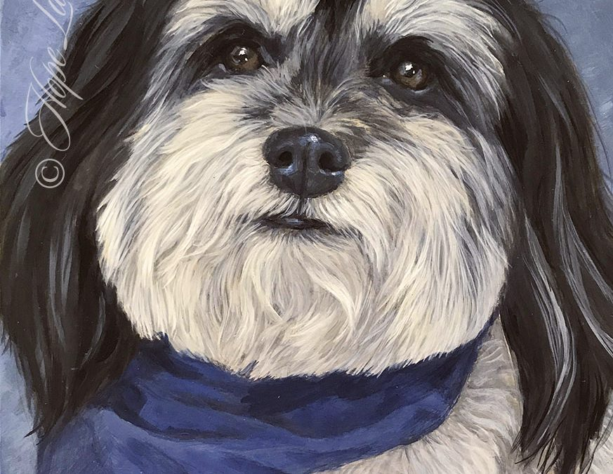 Completed Portrait of Ringo the Havanese