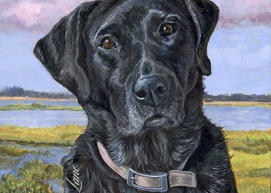Finished Portrait of Pac, a Black Lab